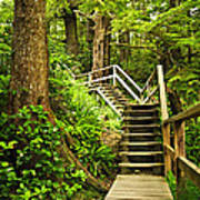 Path In Temperate Rainforest Poster