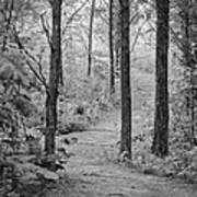 Path In The Foggy Forest Poster