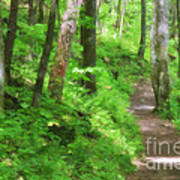 Path In The Forest Poster by Jill Lang