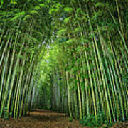 Path Through Bamboo Forest E139 Poster