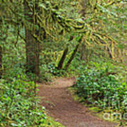 Path Through The Rainforest Poster