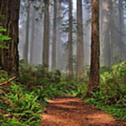 Path Thru The Redwoods Poster