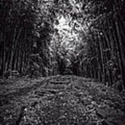 Pathway Through A Bamboo Forest Maui Hawaii Poster