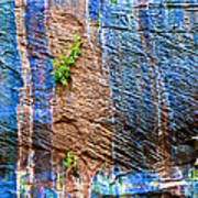 Pattern On Wet Canyon Wall From River Walk In Zion Canyon In Zion National Park-utah  Poster