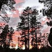 Payson Pines Sunset Poster