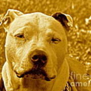 Peace To End Dog Fighting Poster by Q's House of Art ArtandFinePhotography