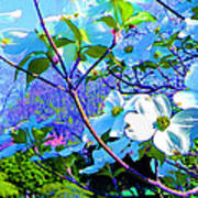 Peaceful Dogwood Spring Poster