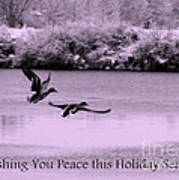 Peaceful Holidays Card - Winter Ducks Poster
