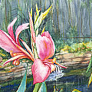 Peach Canna By The Pond Poster by Patricia Allingham Carlson