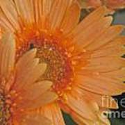 Peach Daisy Cluster Poster