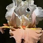 Peach Elegance Poster
