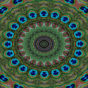 Peacock Abstract Poster