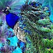 Peacock Bird Of Beauty Poster