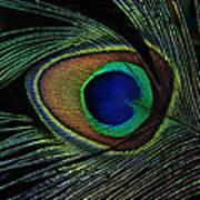Peacock Eye Poster