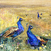 Peacocks In A Field Poster