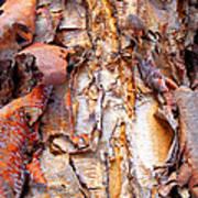 Pealing Bark Upclose Poster