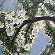 Pear Blossom  Poster