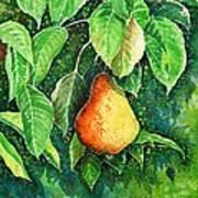 Pear Poster by Zaira Dzhaubaeva