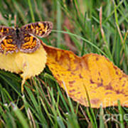 Pearl Crescent Butterfly On Yellow Leaf Poster