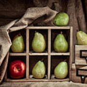Pears On Display Still Life Poster