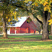 Pecan Orchard Barn Poster