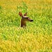 Peek A Boo Deer Poster