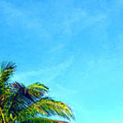 Peekaboo Palm - Tropical Art By Sharon Cummings Poster