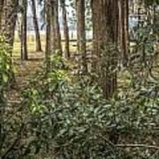 Peeking Through The Trees Poster