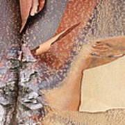 Peeling Bark - Horizontal Poster