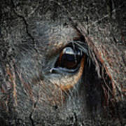 Peering Out Poster