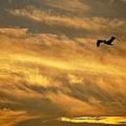 Pelican Against The Golden Sky Poster