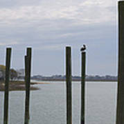 Pelican And Pilings On The Inlet Poster