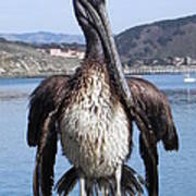Pelican At Avila Beach Ca Poster