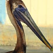 Pelican Bill Poster