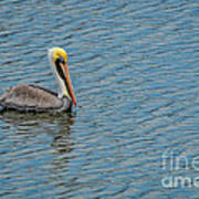 Pelican Drifting On Rippled Water Poster
