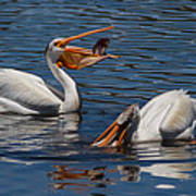 Pelican Fishing Buddies Poster by Kathleen Bishop
