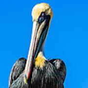 Pelican In Key Largo Poster