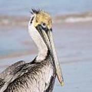 Pelican In Need Poster