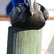 Pelican On Piling Poster