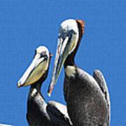Pelican Pair At Oceanside Pier Poster