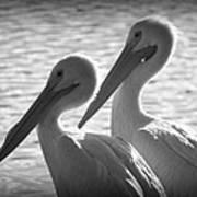 Pelican Pals Poster