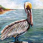 Pelican Pointe Poster