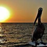 Pelican Sunset 2 Poster