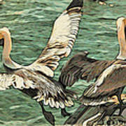 Pelican Take Off Two Poster
