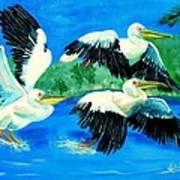 Pelican Trio Poster