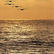 Pelicans Ocean And Sunsetting Poster