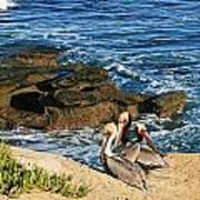 Pelicans On The Cliff - La Jolla Cove Poster