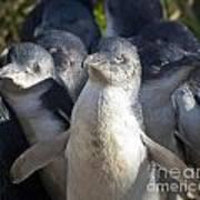 Penguins Poster by Steven Ralser