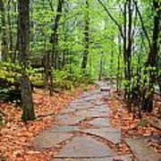 Pennsylvania Hiking Trail Poster