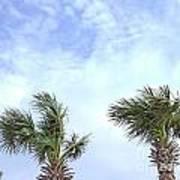 Pensacola Palms Poster